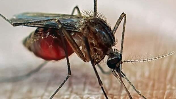 Малярийный комар на коже