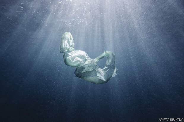 Его величество пластик. Полиэтиленовый пакет в естественной среде обитания — океане. Фото: Аристо Ризи (Австралия), победитель в категории «Вода».