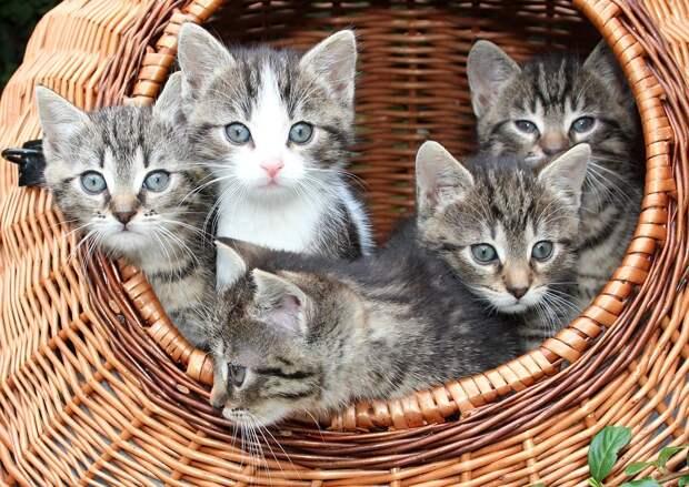 Кошки / Фото: pixabay.com