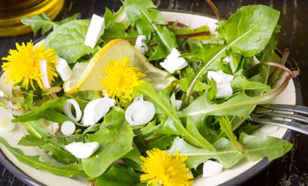 Растения с поля и из леса, которые в ресторанах повара добавляют в еду для вкуса