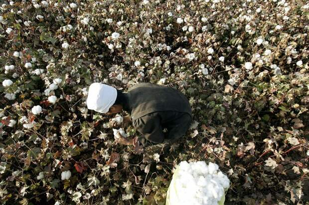 Власти США ограничат импорт из китайского Синьцзяна