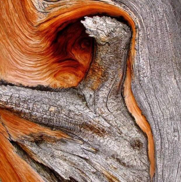 Живописные сухие деревья