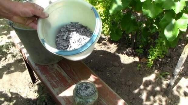 Зола для винограда