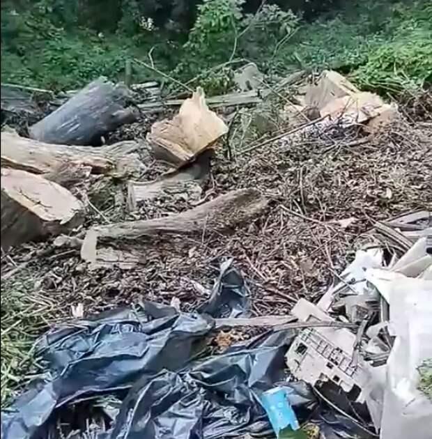 Свалки мусора возле реки Сходни больше нет – префектура