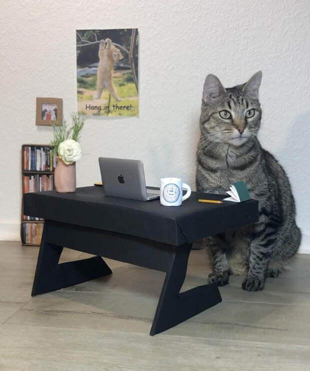 17 неоспоримых доказательств того, что человечество фанатично поклоняется котикам