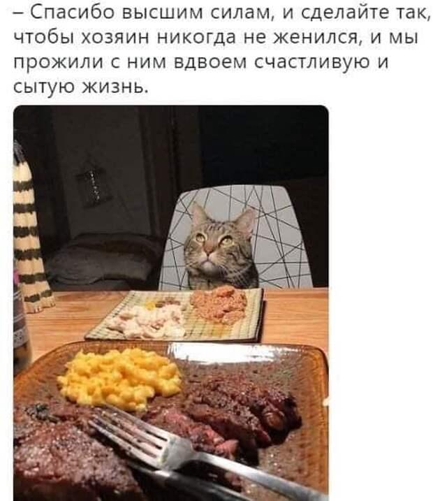 """На изображении может находиться: еда, возможный вариант текста """"-спасибо высшим силам, и сделайте так, чтобы хозяин никогда не женился, и мы прожили с ним вдвоем счастливую и сытую жизнь."""""""