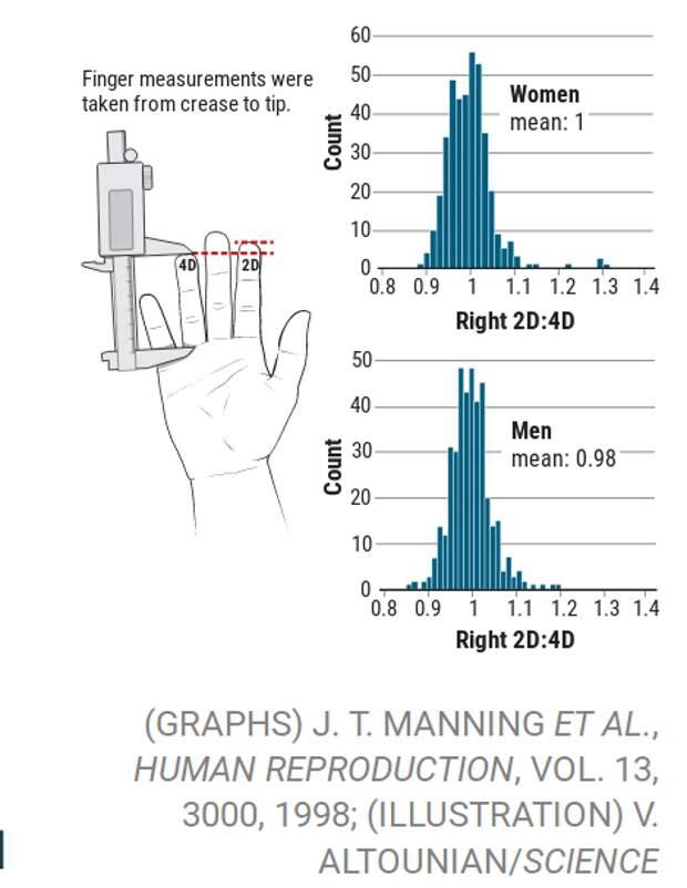 В исследовании Джона Мэннинга и его коллег, проведенного в 1998 году, сравнивающего длину указательного (2D) и безымянного (4D) пальцев, было обнаружено тонкое различие между полами, которое они и другие приписывали гормонам, влияющим на раннее развитие плода.