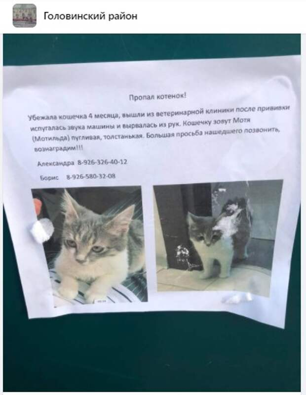 На Онежской кошка сбежала после приема у врача