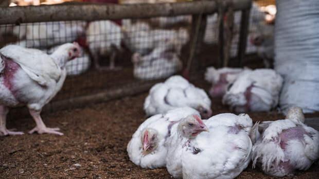 Новая пандемия – от COVID к птичьему гриппу: Никакой конспирологии, только факты