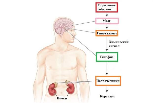 Избыток кортизола: «гусиные лапки» на лице и жирок на животе