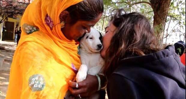 Для своего раненого щенка собака просила помощи у всех прохожих