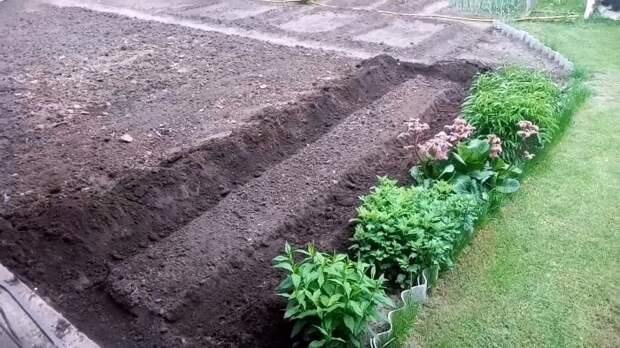 Лайфхак огороднику: Сажаем огурцы под пленку и забываем про полив на весь сезон