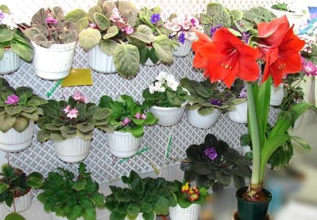 Картинки по запросу домашние цветы в картинках