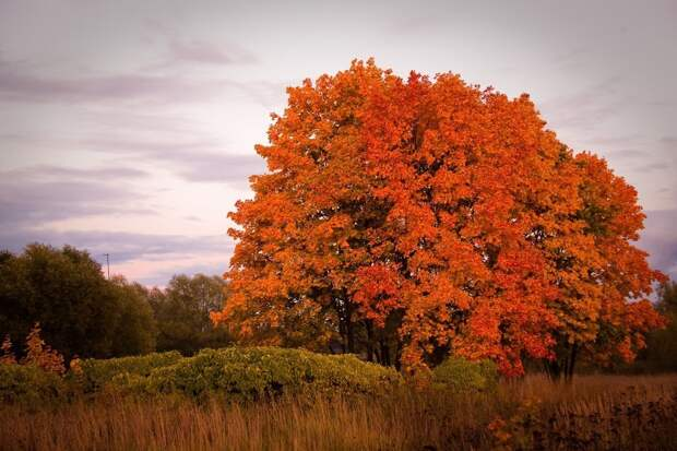 Деревья, которые являются сильными энергетическими донорами