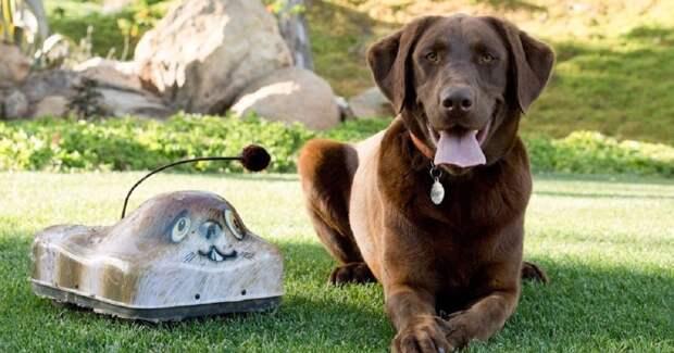 Моторизированный дикобраз! :) Go-Go Dog Pals – игрушка для питомцев ленивых хозяев!