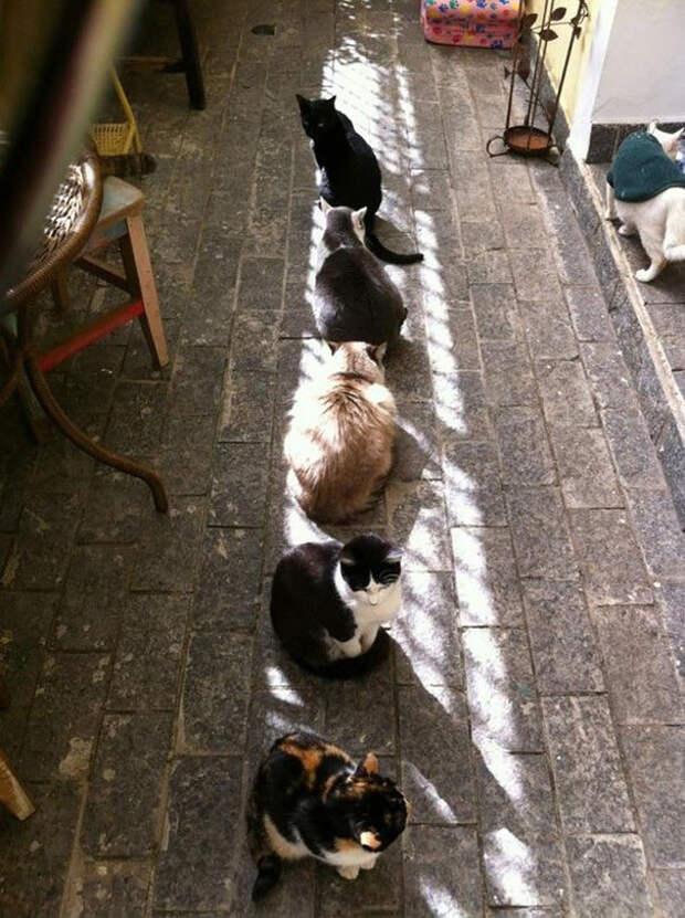 Выстроились вдоль теплого пятна животные, котики, лучи, погреться, солнечные ванны, солнце, температура, тепло