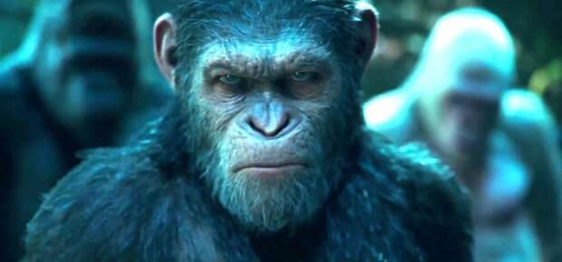 Шокирующие эксперименты: человекоподобные обезьяны