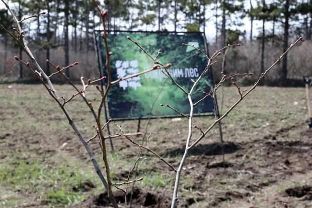 В республике началась экологическая акция «Чистый Крым»