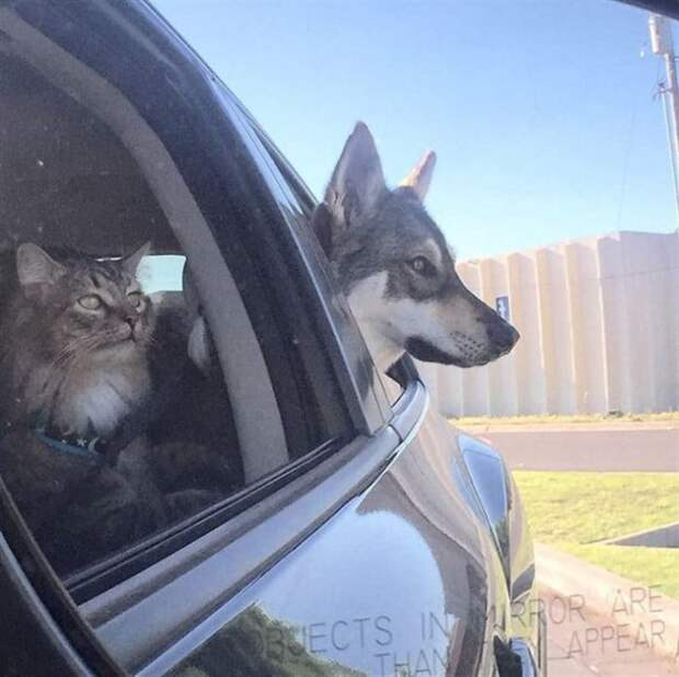Пес сам выбрал себе в друзья котенка из приюта, с тех пор они не разлей вода