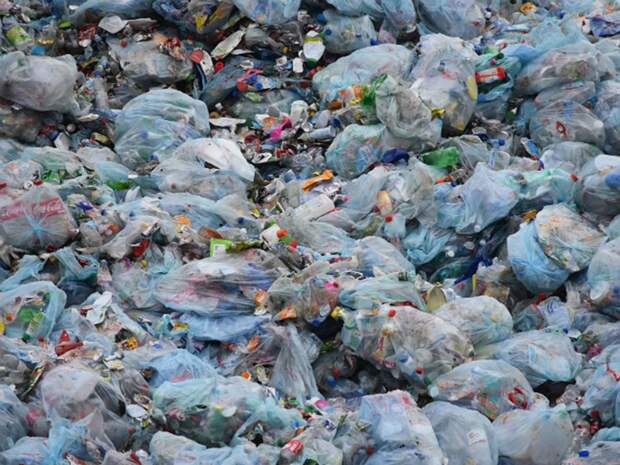 Глава Росприроднадзора выступила за полный запрет «мелкого пластика»