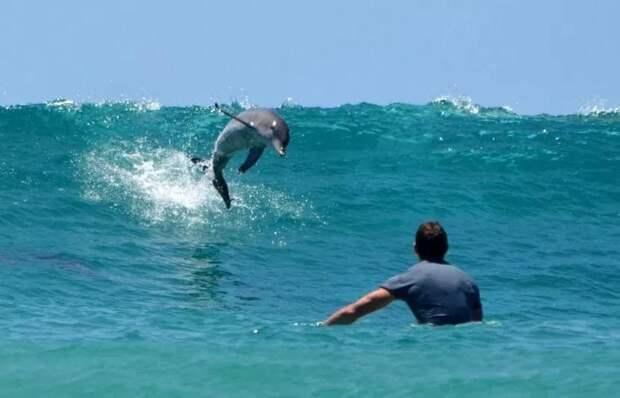Не добрые и не милые… дельфины