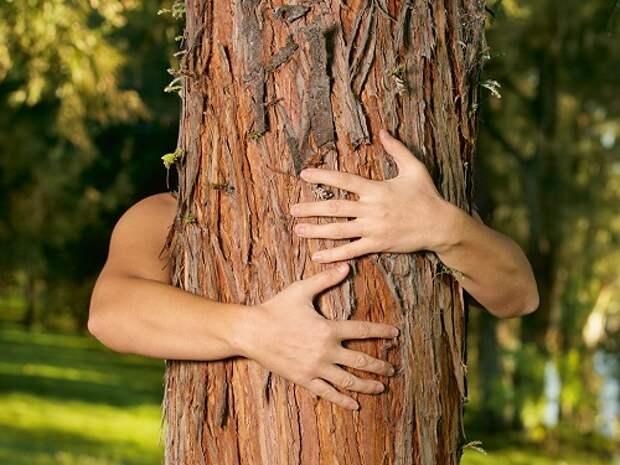 Целительная сила деревьев: о чем просить сосну и почему полезно обнимать березу