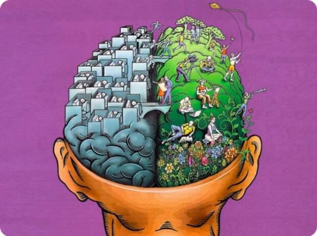 Способности нашего мозга