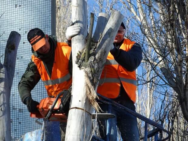 Кронировать деревья на 1-й улице Ямского поля можно будет в ноябре — «Жилищник»