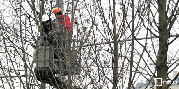 Trees pruning starts on Novy Arbat