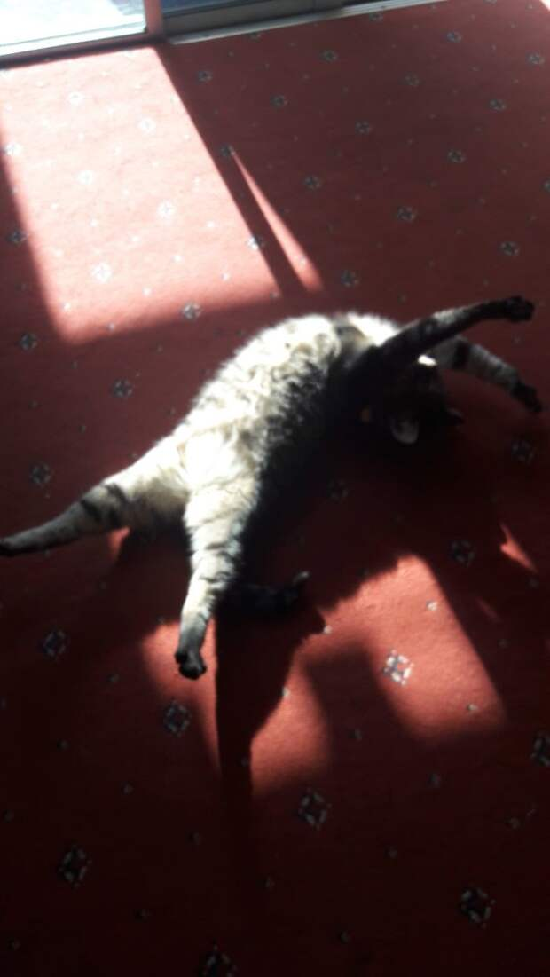 Котопост - это всегда радость животные, коты, кошки, неожиданно, привычки, странности, фото, юмор