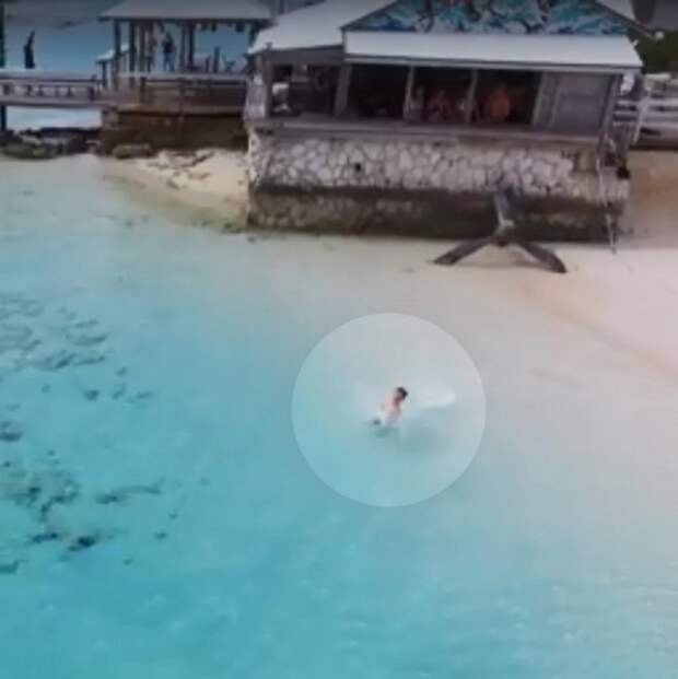 Акулы начали приближаться к ребенку, но их вовремя заметили с беспилотника