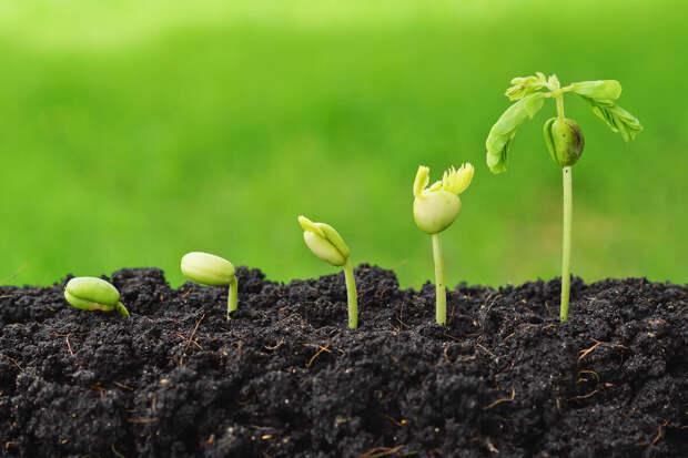 Садовый жаргон: простые термины в области садоводства
