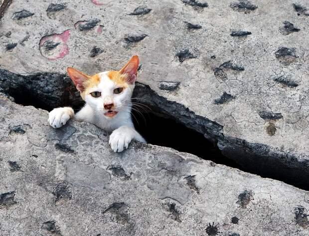 В Ижевске мужчина пытался спасти кота и застрял сам