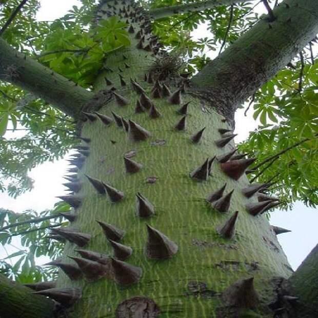 Дерево шелковые нити деревья, невероятное, природа, удивительное, флора