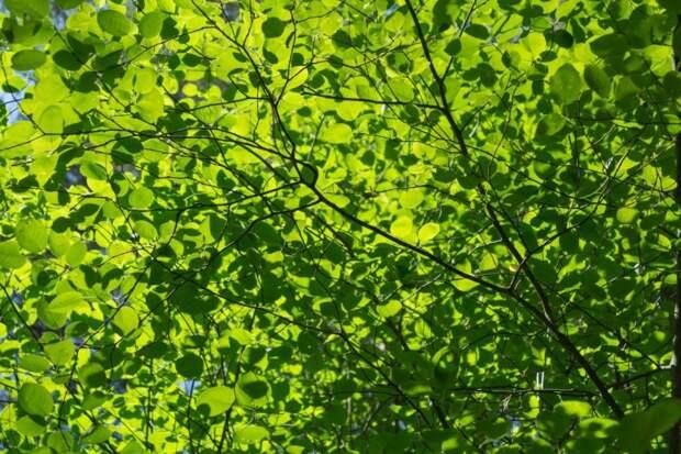 Заслоняют ли естественный свет в квартиру рядом растущие деревья — новый опрос