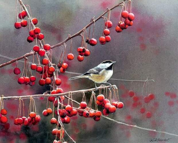 chickadees_and_berries_yapfiles-ru
