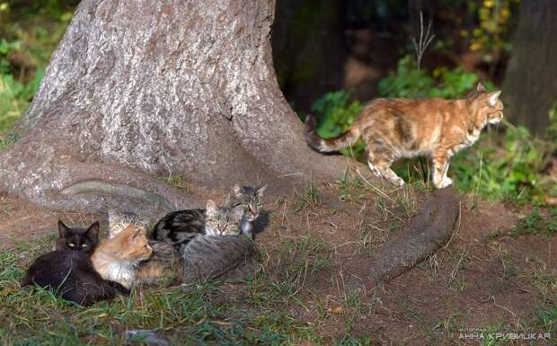 Они вот-вот станут пищей для лисиц... Умоляем, откликнитесь, помогите, потому что это реальный кошмар...