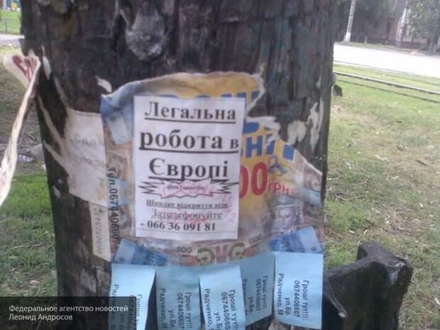 Украина стала нужной: Чехия и Польша надеются на возвращение украинцев на работу в ЕС
