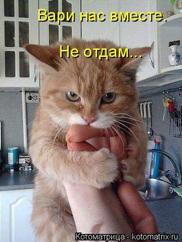 1474017243_kotomatricy-10