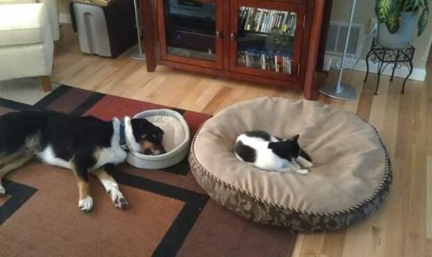 5. Кошки сами решают, какая кровать принадлежит им. Это все знают Кошка в доме, домашние животные, забавные фото с котами., кошка, кошки, фото кошек, хозяева животные, юмор