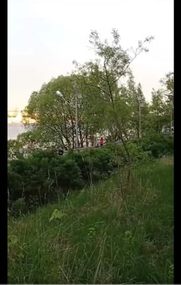 В парке «Северное Тушино» зазвучали соловьиные трели