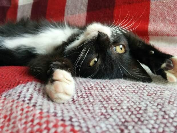 Из кустов выполз котёнок, вскарабкался мне на ботинок и начал мяукать...