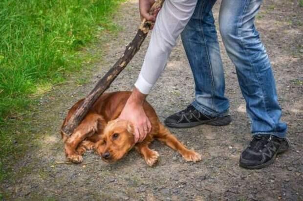 Австралия посадит за решетку обидчиков животных и безответственных хозяев (4 фото)