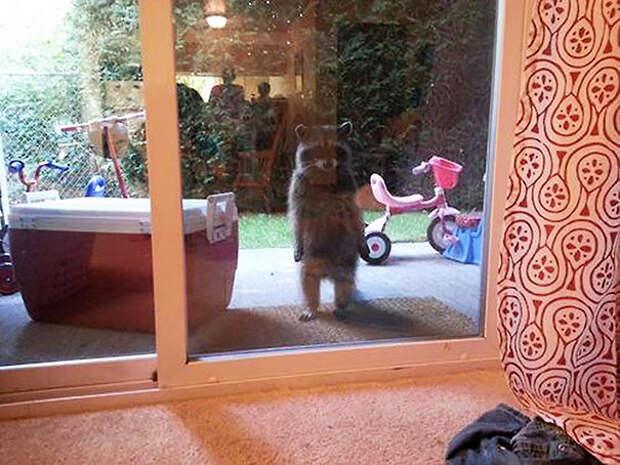 Их месть будет страшна! :) 20 животных, которым немножко не повезло, ведь их забыли впустить в дом…