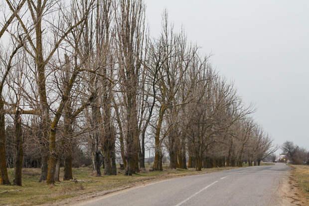Крымские учёные придумали, как восстановить лесополосы
