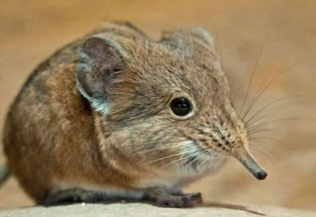 Самые маленькие животные: кто они и где обитают? (5 фото)