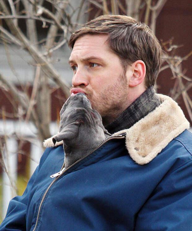 Все любят актера Тома Харди, а Том Харди любит собак!