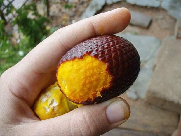Экзотические фрукты. Познавательно