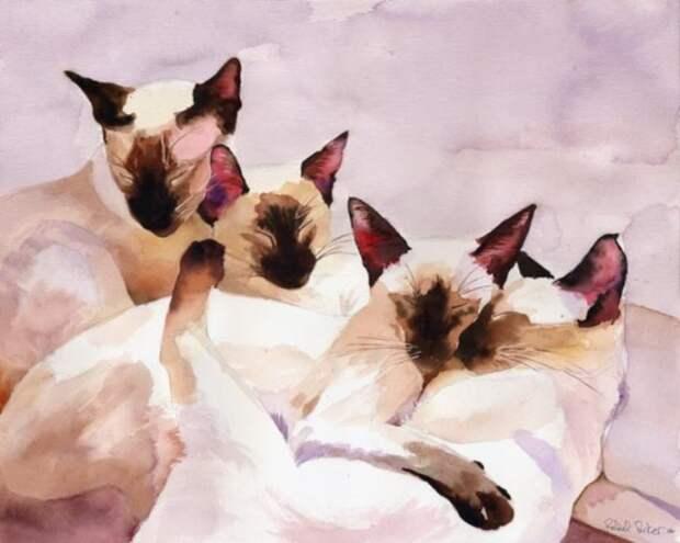 Очаровательные сиамские коты. Автор: Rachel Parker.