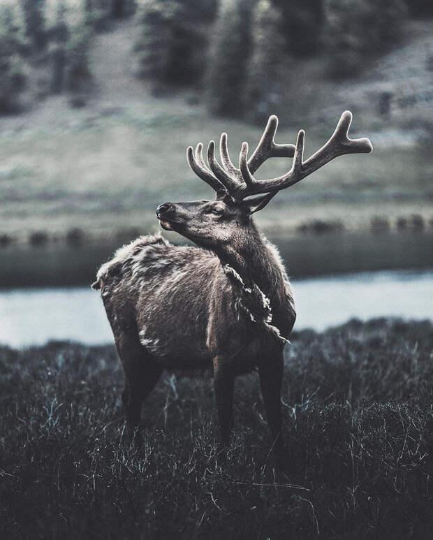 Когда дикая природа вызывает восторг. Фотограф Донал Бойд 78